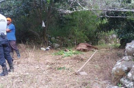 Policía constata maltrato animal en predio de Max Faura
