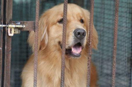 Paso monumental en medio de la pandemia: China prohíbe criar perros para consumo humano