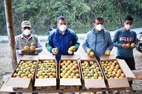 Productores de granadillas de Chinchao logran 380 mil soles de crédito de AgroPerú