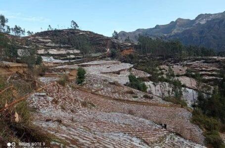 Granizadas destruyen 65 hectáreas de diversos cultivos en Cayna y Quio