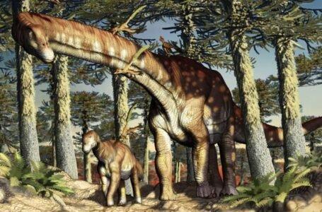 Argentina: hallan un titanosaurio de 140 millones de años, el más antiguo del mundo