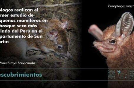 Biólogos descubren 29 especies de pequeños mamíferos en bosque seco más aislado de Perú